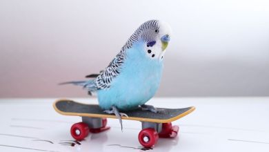 Photo of Budgie Toys under 2$ Every Budgie owner should have this!