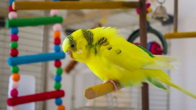 Photo of Do Parakeets like being on their own?