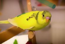 Photo of Foods You Shouldn't Give to Your Pet Parakeet