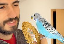 Photo of Budgie Blog: Can you spoil Your pet?