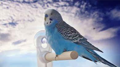 Photo of Can you travel with a Budgie bird? How to safely travel