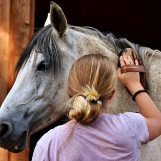 Limpeza do Cavalo