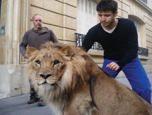 El 'artista', en la imagen, junto al león