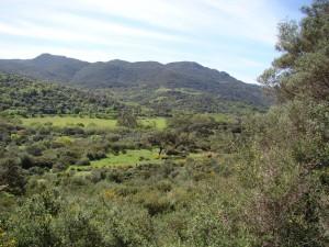 El Parque Natural de los Alcornocales, en venta