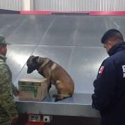 Halla Ejército caja con marihuana en aeropuerto de Querétaro