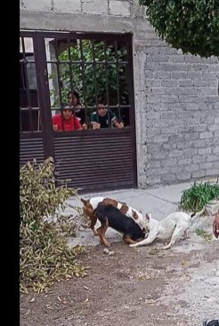 perrito agredido