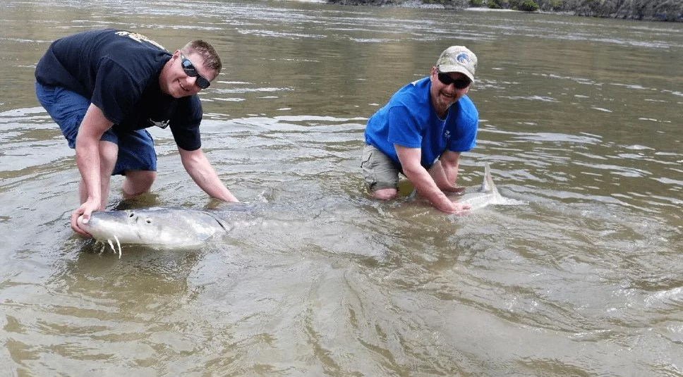 Clearwater River Sturgeon fishing guide