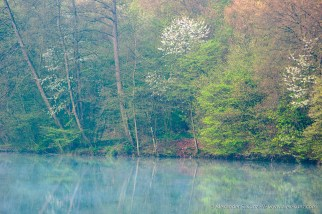 Trees and fresh green reflecting in the waters of Burghausen's city lake, Wöhrsee.