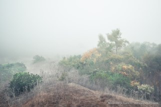 Foggy morning at Black Mountain Ranch, San Diego, California. December 2012.