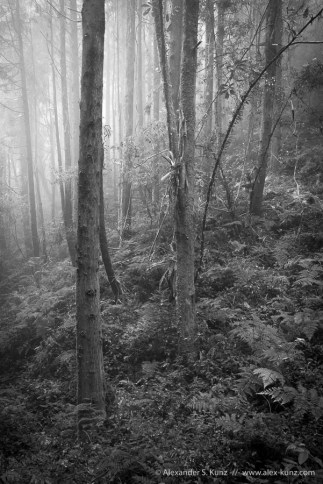 Fog in the subtropical forest of Shan Lin Xi, near Lugu, Nantou County, Taiwan. March 2013.
