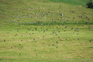 House martins depart