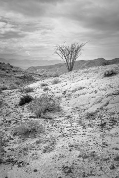 Coyote Mountains Wilderness, California, United States