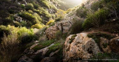 Chaparral Canyon at at Mission Trails Regional Park, San Diego