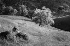 Sloping pastures at Santa Ysabel Open Space Preserve West, San Diego County, CA.