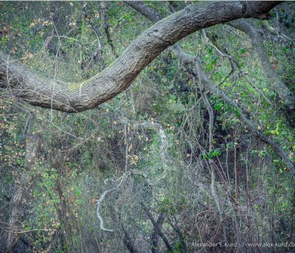 Chaotic array of twigs & branches at Los Penasquitos Canyon, San Diego, CA