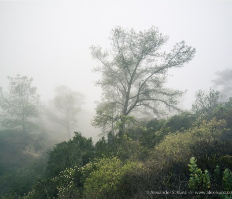 Morning fog at Torrey Pines State Natural Reserve, San Diego, CA. June 2015.