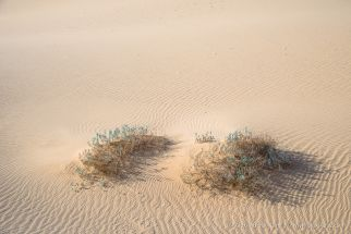 Life in the Dunes 2 -- Algodones Dunes, near Glamis, California, United States