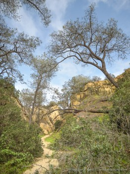 Trail into a sandstone Canyon at Torrey Pines Extension, Del Mar, California, February 2017.