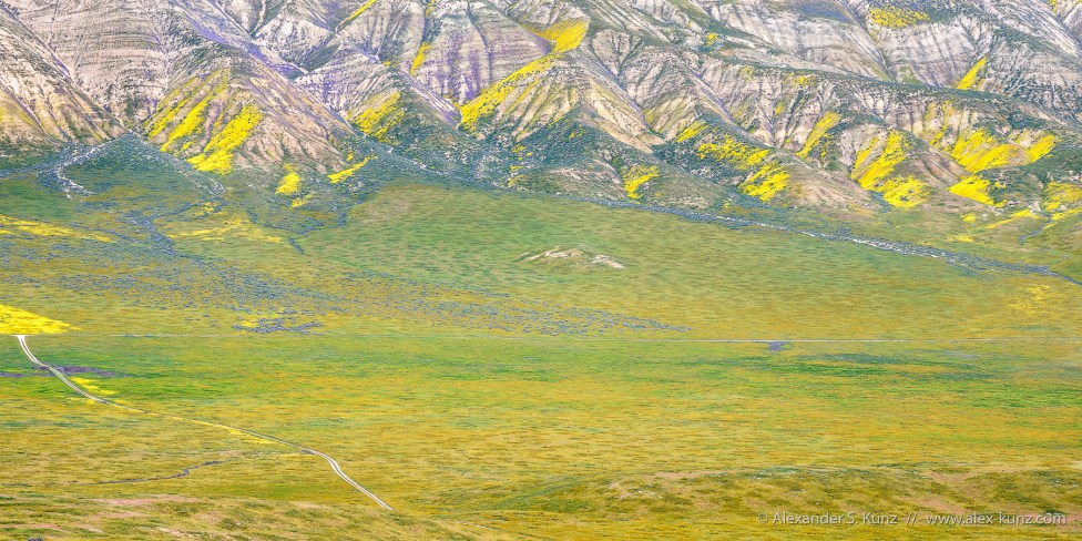 Wildflower colors on the Temblor Range, seen from Elkhorn Hills, Carrizo Plain National Monument, California, April 2017.