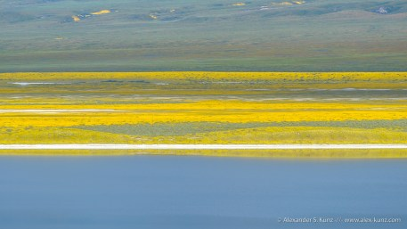 An abstract of Soda Lake with wildflowers, seen from the Soda Lake Overlook, Carrizo Plain National Monument, California, April 2017.