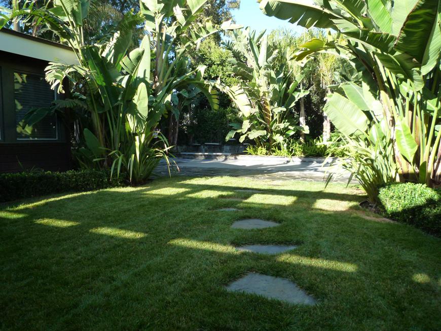tropical backyard P1060193 on Tropical Backyards  id=70646