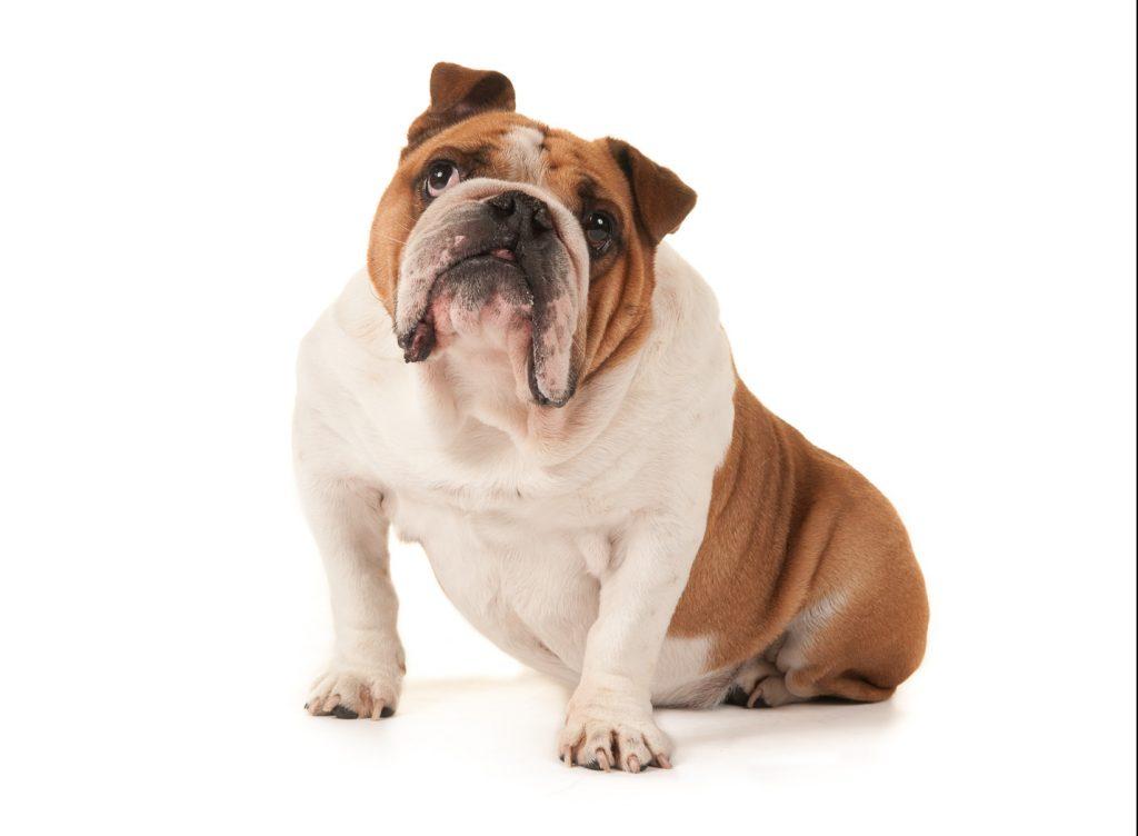 dog-friendly-portrait-photographer-in-west-sussex