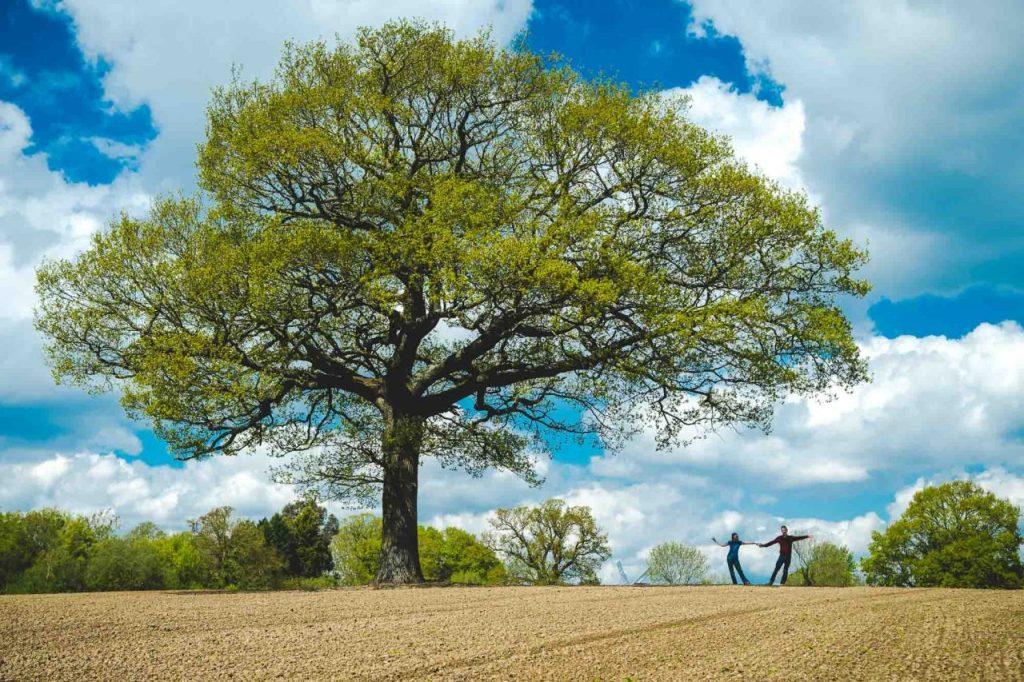 Couple dancing under an oak tree in the middle of an empty field