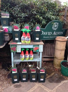 David Austin Roses & Rose rescue spray