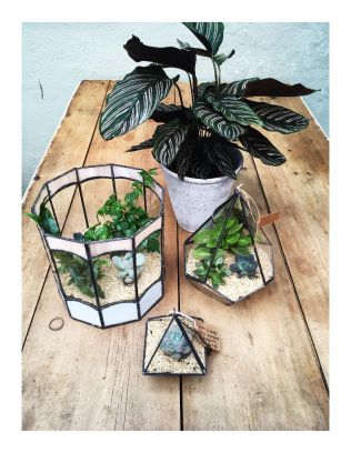 Calathea and Terrariums