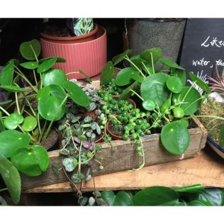 Houseplants Crate