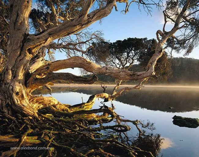 Paperbark Walpole Nornalup Inlet 20x24 inch Print Only