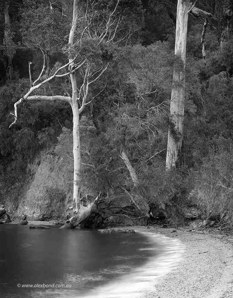 Karri forest Walpole Nornalup Inlet  28x35cm Print Framed Aluminium 50.5cm x 60.5cm