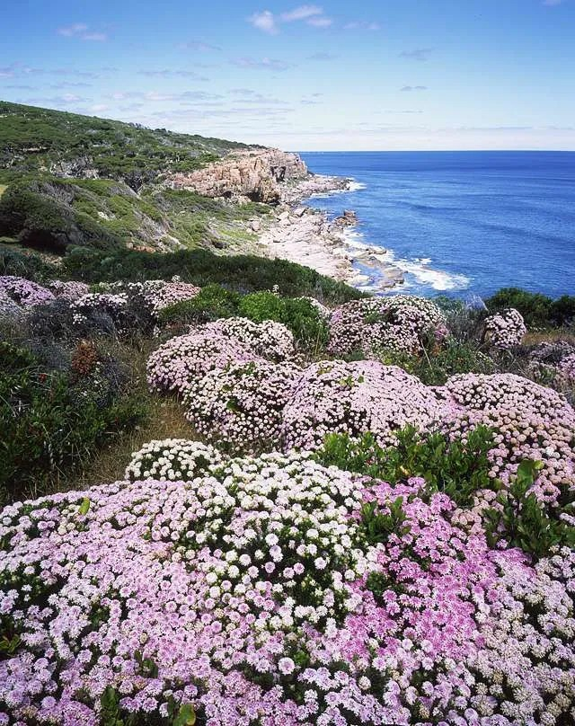 Willyarbrup Cliffs pimelea tetenal E6
