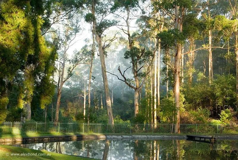 karri forest grows on rich karri loam soil Pemberton