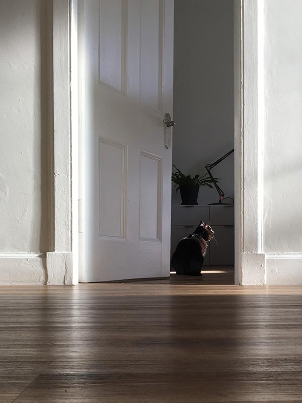 black cat sitting in doorway