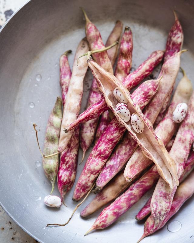 Pink borlotti beans