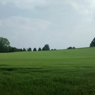 Das Getreidefeld sagt: Willkommen Frühling, willkommen zu Hause