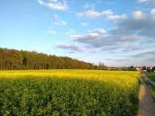 Spaziergang zum 1. Mai am Rapsfeld