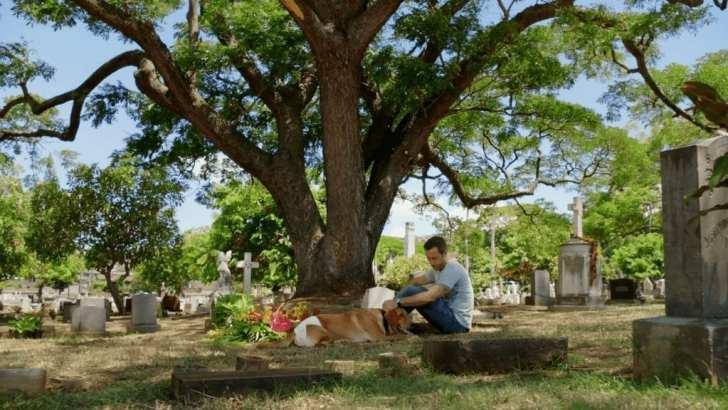 Hawaii Five 0 episode 8.03