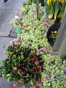 November foliage on display on West 28th Street...