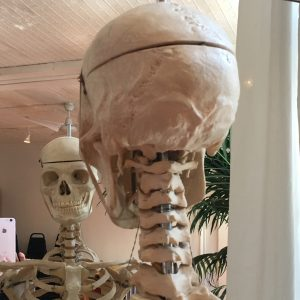 At the BAC, I take a pic of Bernie the skeleton's cervical spine...