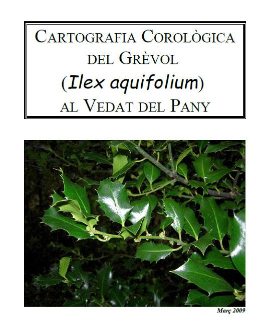 I tot sol vaig fer un inventari de boix grèvol al Vedat del Pany. Un arbre protegit per la normativa vigent, tot i que sense cap figura de protecció del seu hàbitat.