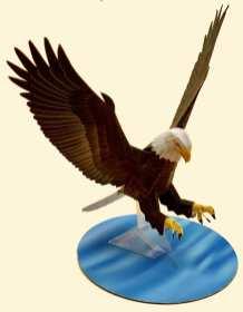 Aquila testa bianca - Americhe