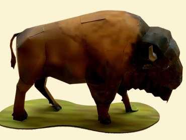 Bisonte - Americhe