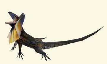 Clamidosauro 1 - Oceania