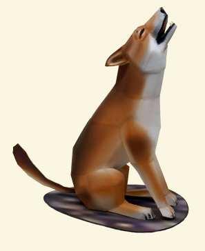Dingo - Oceania