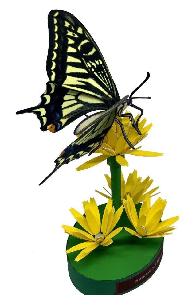 Farfalla a coda di rondine
