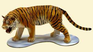 Tigre - Asia