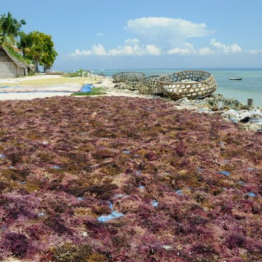 A beach covered with seaweed