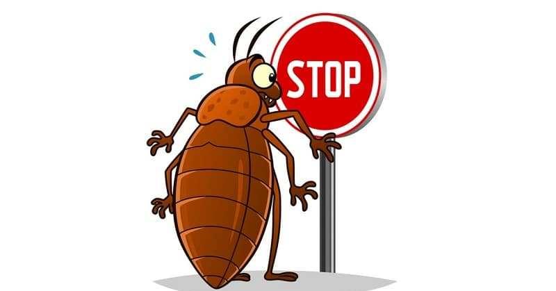 كيف تحمي منزلك من الصراصير في الصيف